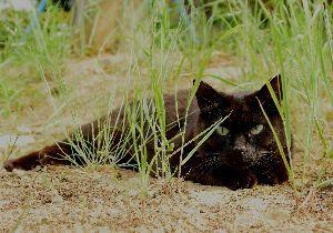 ゴルフの呼吸法は? 息は止めるか、吐くか 昨日も暑かった。  今日も暑かった。  まるで真夏が来たように。  昨日公園で黒猫を見た。  今日は