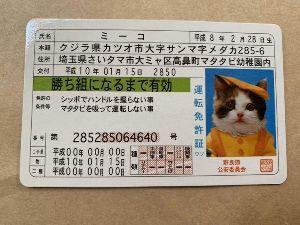 8892 - (株)日本エスコン ミーコをなめんなでちゅ  舐めるのはミーコの番です。