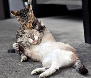 アザラシの家 (´ω`っ )3 含み損を見る度に憂鬱になるので近所の猫でもいじめるかな( ・ิω・ิ)