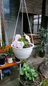 なにかと疲れてはいるけれど こんばんは(^ー^)  いい天気で爽やかな風が気持ちよかったですねぇ。 でも、屋内にいると肌寒く 朝