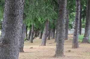 私流の自然体写真 近所の気に入った写真