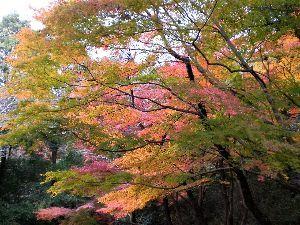 私流の自然体写真 今日は小牧山の紅葉を