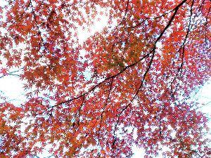 私流の自然体写真 空に広がる紅葉