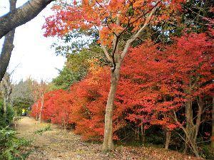 私流の自然体写真 今年も小幡緑地に秋が来ました。