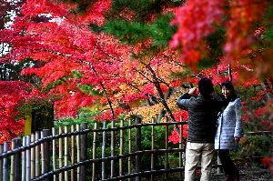 私流の自然体写真 最後の紅葉「須賀川牡丹苑」2
