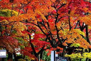 私流の自然体写真 最後の紅葉「須賀川牡丹苑」