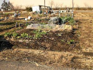 私流の自然体写真 今日は雪も治まり、体調も良いので3月に返却する農園のかたずけに。 折角セットしたフェンス、支柱を取り