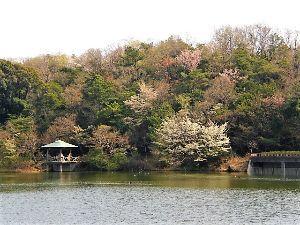 私流の自然体写真 春うらら の小幡緑地の池です。