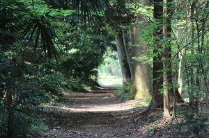 私流の自然体写真 近くの散歩コースですが・・・好きな写真です