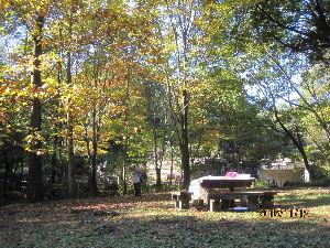 自分探しの旅 こちらの「秋の風景」は、去る11月12日に 東京・町田市の「忠生公園」の一角を撮影したものです。