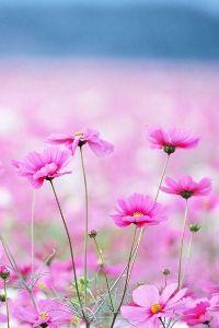 *:.。☆..。.(´∀`人)今日のひとこと おはようございます。  冷たい雨の夜明けであります。  我が愛しきカノン嬢へ…  ☆k