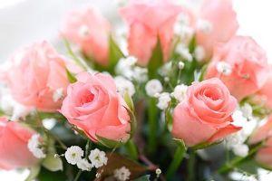 *:.。☆..。.(´∀`人)今日のひとこと 薔薇