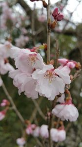 年末そうそう引きこもりのおっさんのスレ立ち上げ 桜見に来た〜☺︎