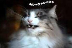愚痴って ななたん、おはよう  また投稿拒否やがなぁ  ヤホ~さん、どないなっとんや(-_-)/~~~ピシー!