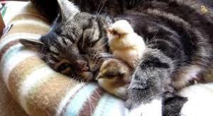 生活住い、ぺット猫カテに巣くう猫狩り人が居ます。 猫は狩りをして生きる動物だから当たり前 人間も狩りをして生きる 焼鶏なども食うし、必要のない狩りはし