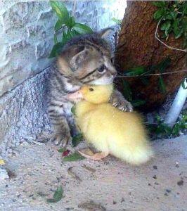 生活住い、ぺット猫カテに巣くう猫狩り人が居ます。 獣似非被害者から守ってやるぞと見えませんか?