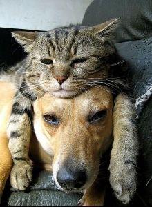 ♦♦♦♦♦可愛い動物・面白い動物画像をただただ貼り付けていくだけのスレ♦♦♦♦♦ 犬の頭の上に乗る猫  あ~!!  カオリ~ン  見つけた~!!(微笑)