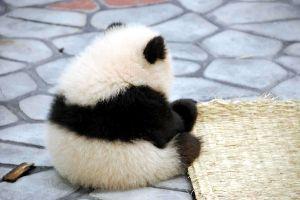 ♦♦♦♦♦可愛い動物・面白い動物画像をただただ貼り付けていくだけのスレ♦♦♦♦♦ う~っ!!   先を 読まれてるぅ~(微笑)(^_-)-☆