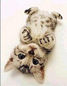 ♦♦♦♦♦可愛い動物・面白い動物画像をただただ貼り付けていくだけのスレ♦♦♦♦♦ ナポピィ~ アメ車見つかったかなぁ~(微笑)
