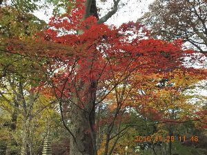 気楽に話しそう  うめさん今日は、昨日は九品仏浄真寺に紅葉を見に行って来ましたが、想定通り未だ 一寸早かったですね。