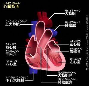 honkytonk流『徒然草』 >お千恵と同じ病なんだね  正確に言うと、鶴さんの病は「大動脈剥離」 お千恵のそれは「大動脈か