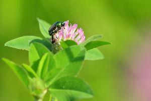 花・蝶などに興味おありの方どうぞ 2 【郊外のため池の堤で出会った花・昆虫など 5点】  皆さん 今晩は。   ため池の堤で咲いていた「ア