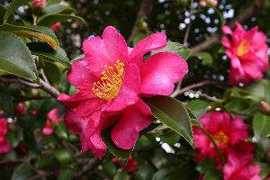 花・蝶などに興味おありの方どうぞ 2 syu*****さん おはようございます。   園芸種のスミレのようですね?   濃い緑の葉に白い花