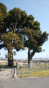 岡山 歌声喫茶♪ こんにちは~♡  アキ君の お散歩中で、干田川の橋の上からですワン  ジャランさんも 大変ですねえ(
