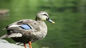 5288 - アジアパイルホールディングス(株) 500で飛んできてくれた 渡り鳥さんたちが 餌がもらえる日までいてくれるかどうかですね。 ノンビリし