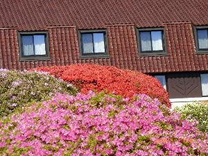 私の日記帳 こんにちわ ぱんださん   土曜日から一泊で箱根~伊豆半島に行って来ました  家内がテレビでやってい