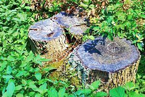 50歳以上の集会所で語らいを 若いときは 老木や朽ちた大樹を 撮影したものです 木の年輪も好きです 風雪に耐えた木に賛辞!!