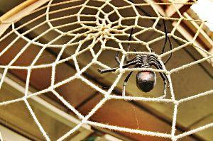 50歳以上の集会所で語らいを 花屋さんに巨大蜘蛛 よく見ると 作られた蜘蛛でした 少しは暑さを忘れました 恐怖と楽しさの世界でした
