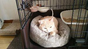 知多市の人こんにちわ パコちゃん天国にいったんで、寂しくなりますね。 犬猫トピ長い間続きましたが、今年中で閉鎖で。 まだ、