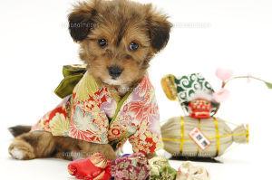 コーヒー一杯分の幸せ oroちゃん、皆様♪ 明けましておめでとうございます(*・ω・)*_ _))ペコ 今年