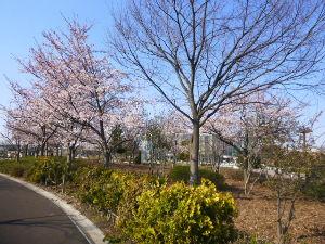 外来受付です 昨日ワンコちゃんと桜を見に行ってきました。  満開~でも、もう散りかけていました。 何だか寂しい感じ