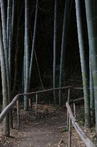 リバーサルで街歩き2 【いつもと違う道】 鎌倉駅から北のほうへちょっと歩いたところに、いい感じのお寺を見つけました。 由緒