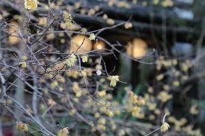 リバーサルで街歩き2 【桜下見】 まだ蕾でした。鎌倉は。 この時期、陽射しがあれば暖かいのですが朝夕そして日陰は&hell