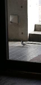 リバーサルで街歩き2 【鎌倉の彼岸花】 僕は、いつも適当に歩いているんだけど みんな、時期を知っているので なのか、旬にな