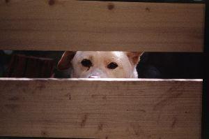 リバーサルで街歩き2 【北鎌倉】 お家の庭からこっちを見て吠えてきた犬です。 なにか言いたいことがあるのかな。 気になった