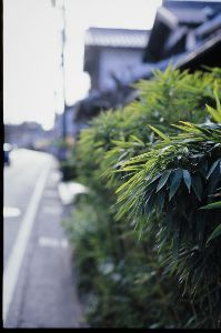 リバーサルで街歩き2 【京都、行きたいなぁ】 天気 良かったですね! 鎌倉はすごい人出でした。 僕は開店前の時間に歩くこと
