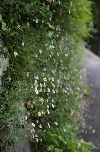 リバーサルで街歩き2 【おっ、来てるな!!】 九州へ行ってきました。 今年は残念ながら声のみ。姿は見つけられませんでした。