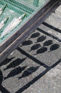 リバーサルで街歩き2 【鳥たちの声】 いい天気でした。 すごい陽射しでしたね。 このままGWに突入なのでしょうか。 今年は