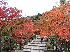 昔、昔、旅行をしました。そんな思い出ですよ。 これは、永観堂(禅林寺)かな。  空海(弘法大師)の高弟である僧都・真紹が、都における実践道場の建立