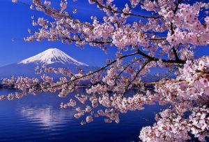 8515 - アイフル(株) 今年の桜は、今までの桜で『一番美しい桜🌸』だと思います😁、、、多分。