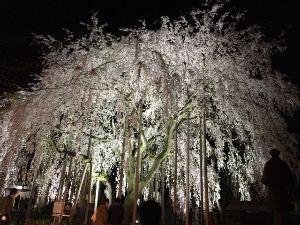 んじゃ~いつもんとこで♪ この前話した、夜桜のヤツ~  クリックで拡大d( ̄∇ ̄*)