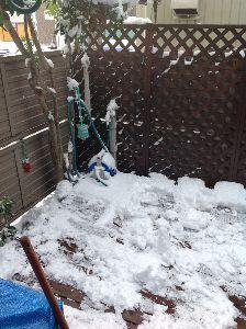 あの日に帰ってみたいですね。 家に中から見た雪景色。
