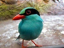 9263 - (株)ビジョナリーホールディングス 私 美人でしょ 鳥ですが・・・(笑) ビジョナリー ガンバルナリー
