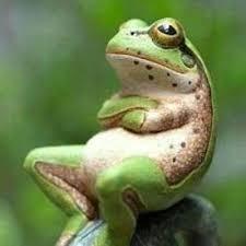 遊びながら正義の山を探してみよう^^ .             ガンジスに還る → 蛙の置物      無事 帰る