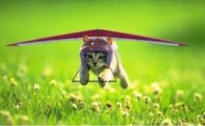 7776 - (株)セルシード セル。花金!!🌸🌸 イケイケ、上昇気流に乗れ!!🌸🌸