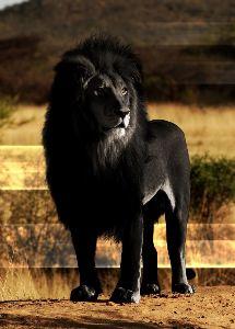 西武ライオンズ最高っ! にゃー